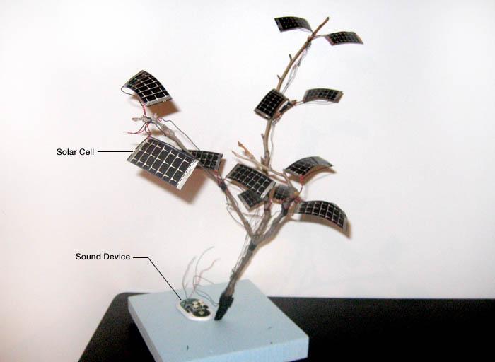 solar branch
